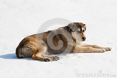 Dog sitting on snow