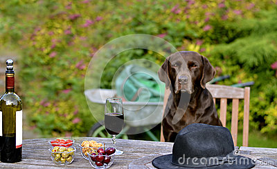 Dog Sitting at Table