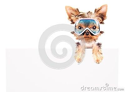 Dog with ski mask above billboard