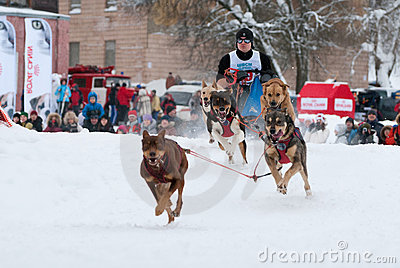 Dog sled Editorial Stock Image