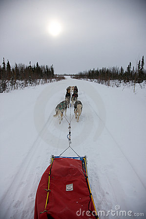 Free Dog Sled Team Royalty Free Stock Images - 17432059