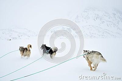 Dog sledging trip, Greenland