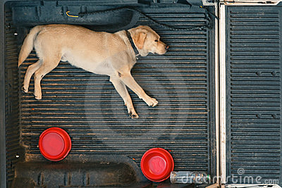 A dog sleep on the back of a van