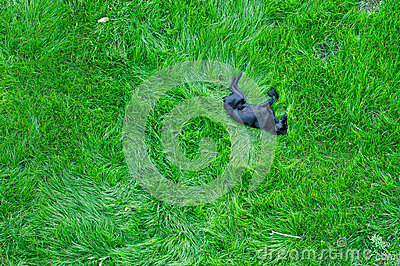 Dog sleeping on green grass