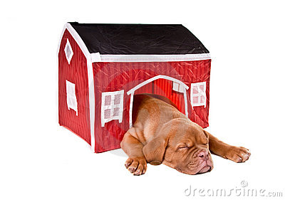 Dog sleeping in a house