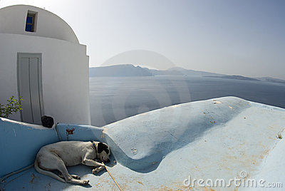 Dog sleeping santorini
