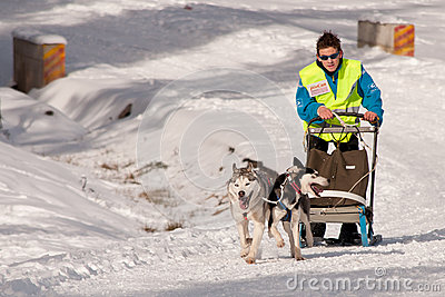 Dog sleigh racing in Transylvania Editorial Stock Image