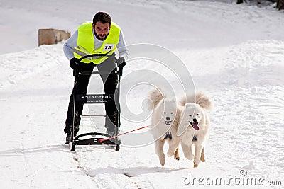 Dog sleigh racing in Transylvania Editorial Image