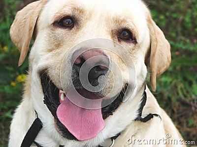 Dog smile 2