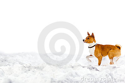Dog in snow on white