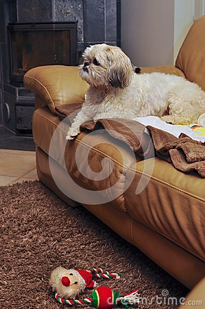 Dog in sofa