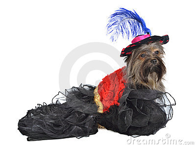 Dog with splendid dress and hat