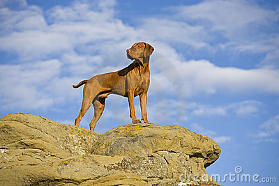 Dog standing on cliff