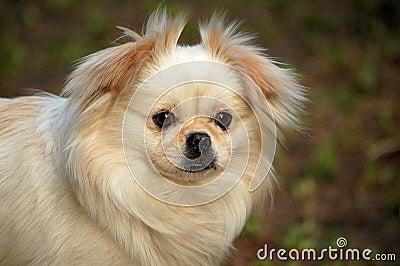 A dog, staring at me