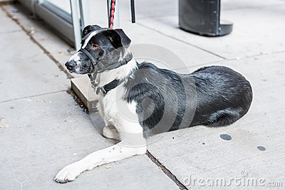 Dog strapped at street side