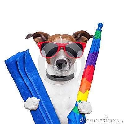 Free Dog Summer Holidays Royalty Free Stock Photography - 26274857