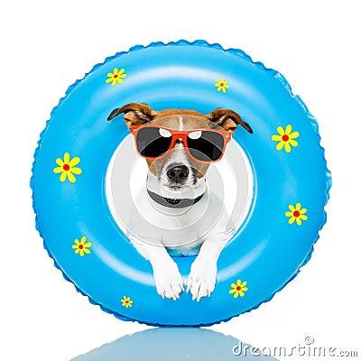 Free Dog Sunbathing Stock Photos - 24192753