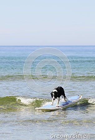 Dog surf