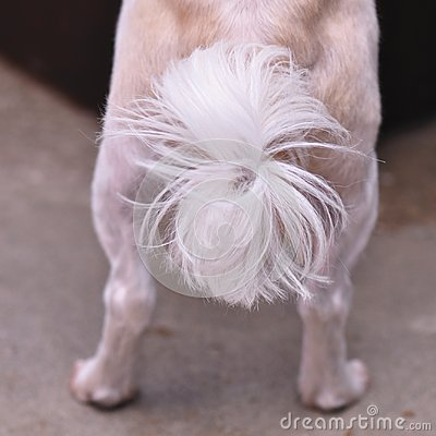 Free Dog Tail Royalty Free Stock Photography - 100535817