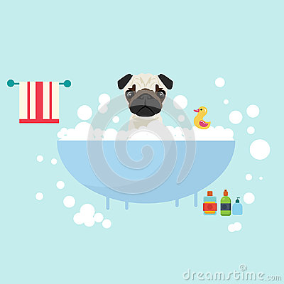 Free Dog Take A Bath Wet Grooming With Soap Shampoo Bubbles Animal Lover Royalty Free Stock Photos - 96539368