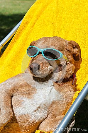 Dog taking sun bath
