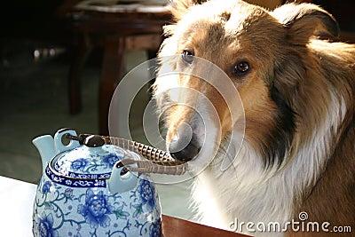 Dog and tea pot