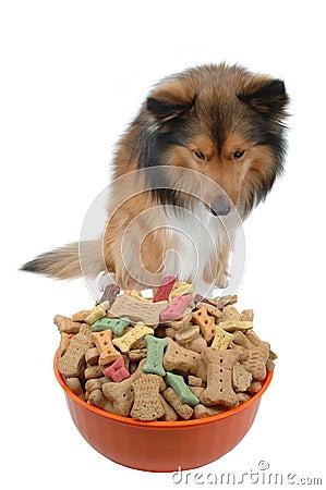 Dog temptation