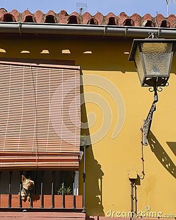 Dog in terrace