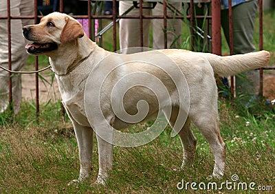 Dog thoroughbred