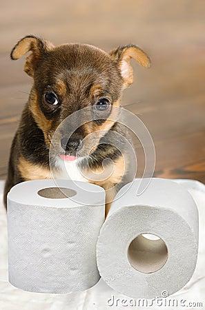 Free Dog Toilet Stock Photo - 24835690