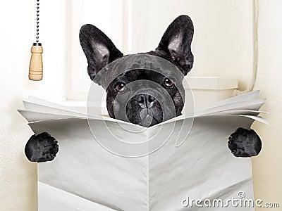 Dog Toilet Stock Photo Image 40248586