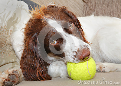Dog with toy ball