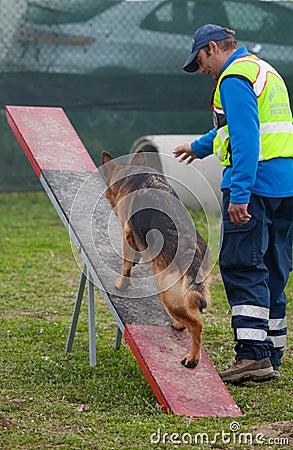 Free Dog Training Stock Photography - 24292812