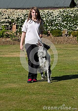 Free Dog Training Stock Photo - 24930120