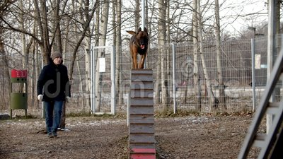 special training ground for the dogs  a trained german