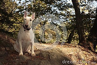 Dog on trip