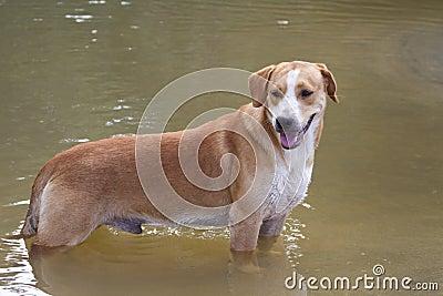 Dog on the tropical beach