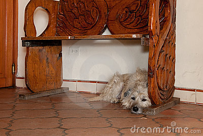 Dog under wooden bench