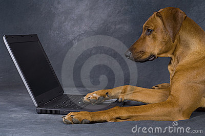 Dog using computer for surfing in the network