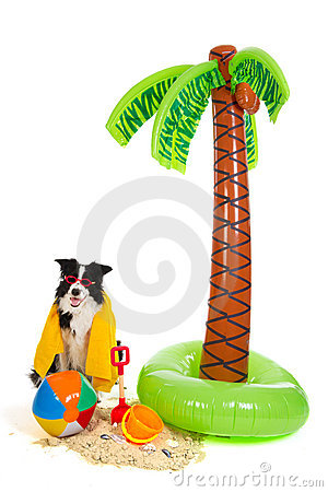 Dog on vacation at tropical beach