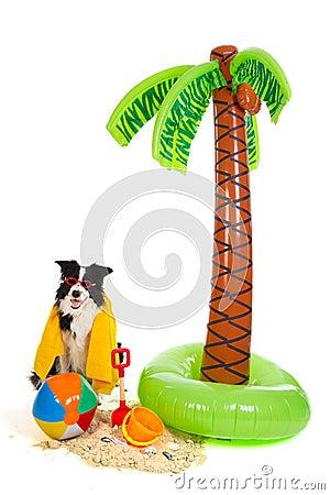 Dog on vacation at tropical beach
