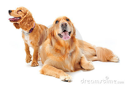 Dog valpen