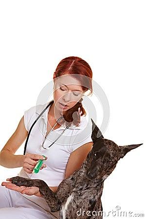 Dog at veterinarian getting