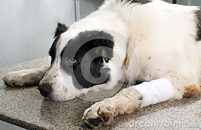 Dog in a veterinary clinic