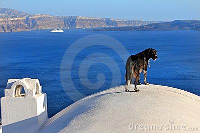 Dog View of Santorini