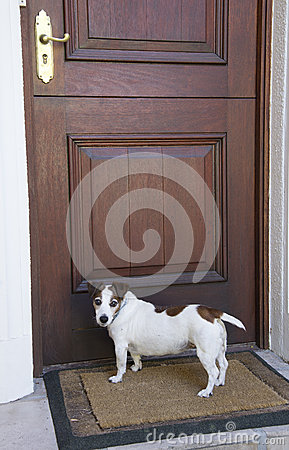 Free Dog Waiting At The Front Door Stock Photography - 53990222