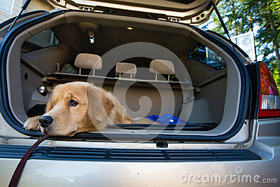 Dog waiting for a road trip
