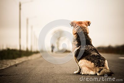 Dog waiting in the street