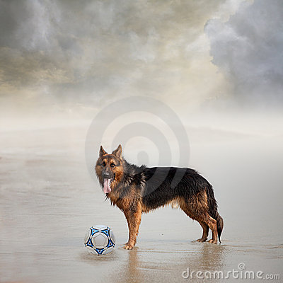 Dog Waits for His Friend to Play Football