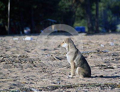 Dog waits on the sand